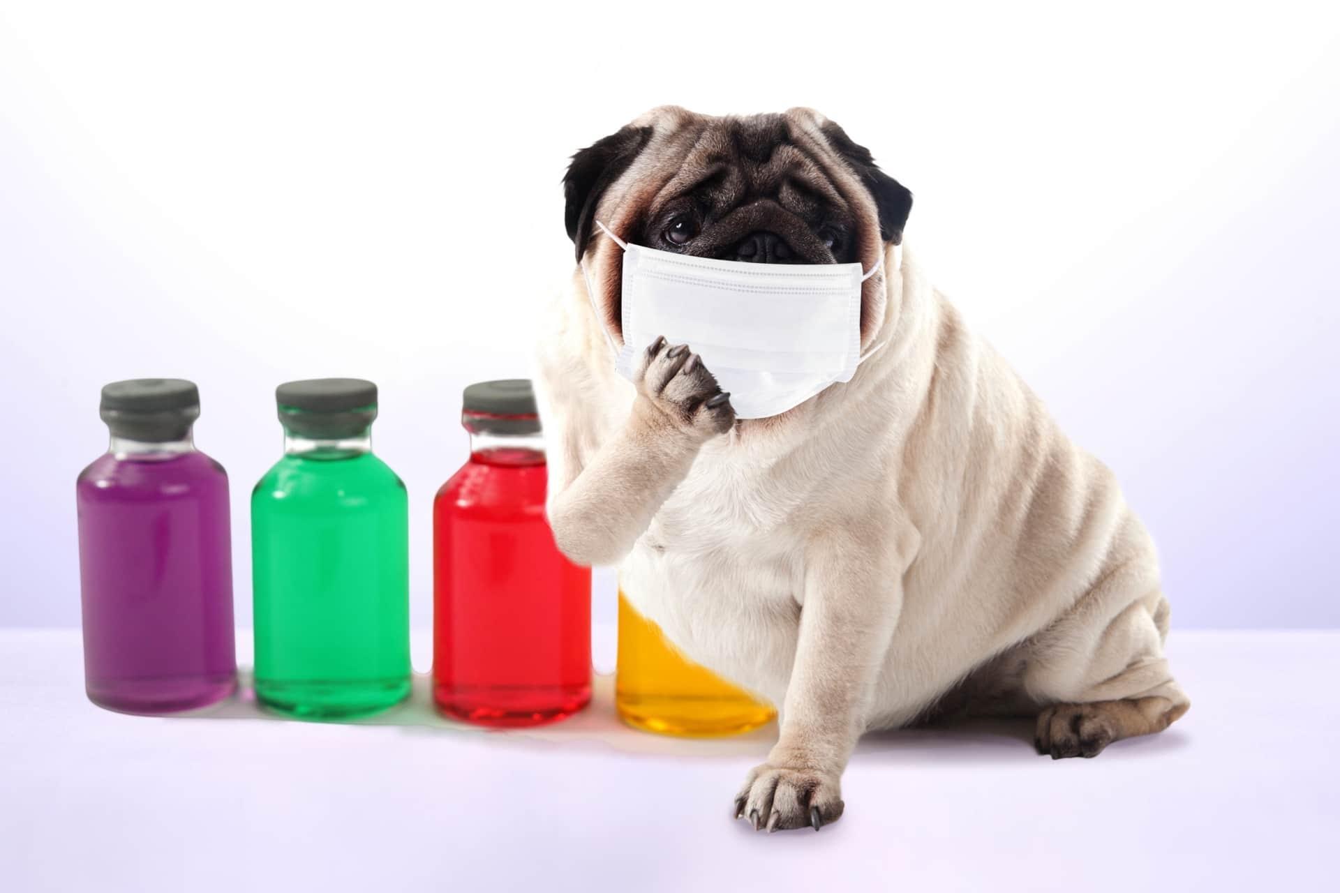 花粉症の予防と対策